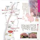 河津桜コース