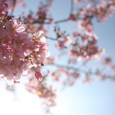 みなみから春風が吹いたら出かけよう