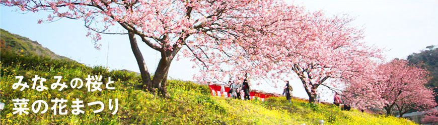 みなみの桜と菜の花まつり