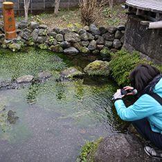 湧水に寄り添って暮らす街、三島